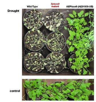 Gene for Enhancing Drought Resistance in Plants