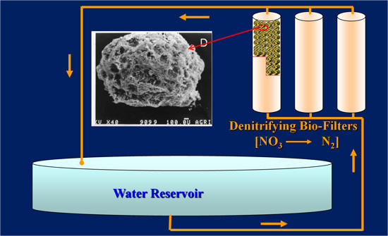 Novel Biofilters to Reduce Nitrate Levels