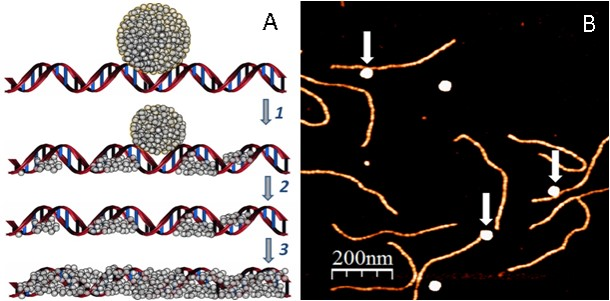 Conductive Metallized DNA-Based Constructs for Molecular Electronics